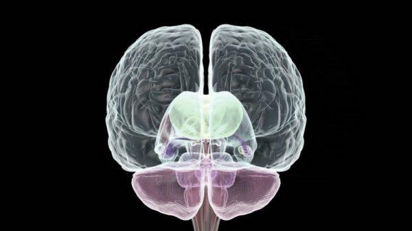 El hemisferio derecho del cerebro