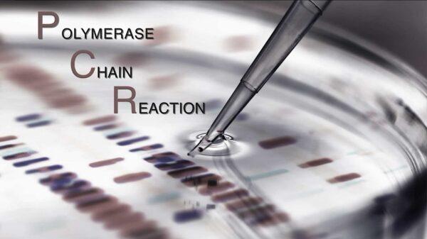 La estafa ha sido confirmada: La PCR no detecta el SARS-CoV-2, sino secuencias genéticas endógenas
